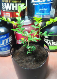 Grow in a plant in a protein tub